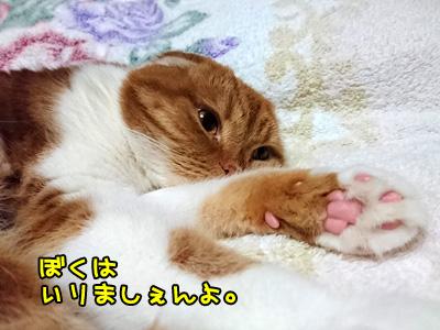 これは猫のふくじゅ(笑)