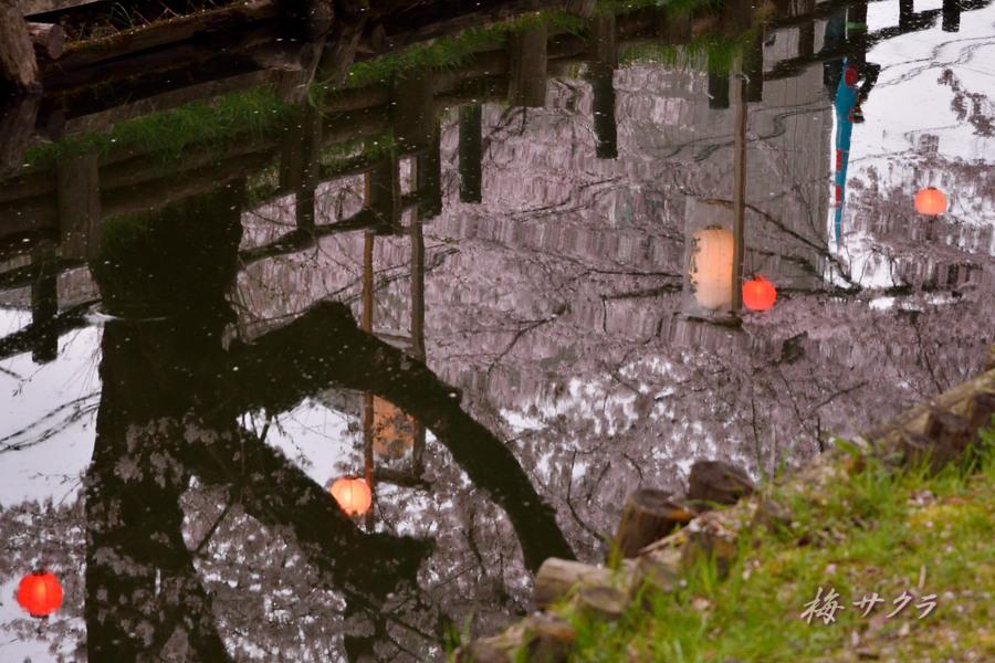 小江戸川越桜祭り1(誉桜12)変更済