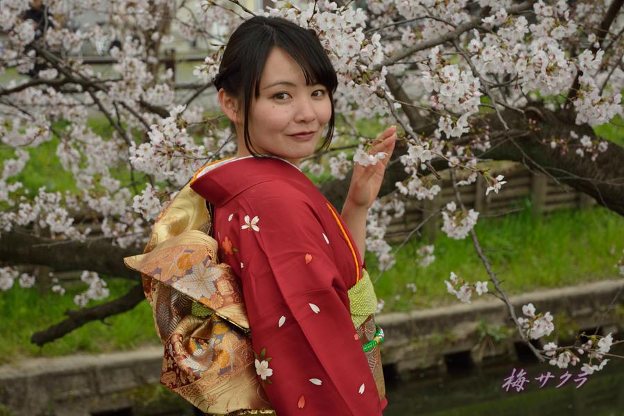 小江戸川越桜祭り2(2)変更済