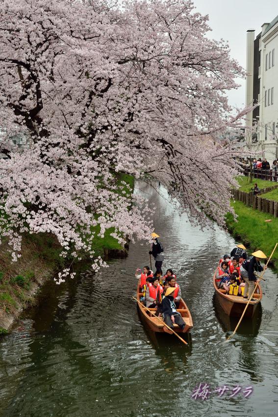 小江戸川越桜祭り3(3)変更済