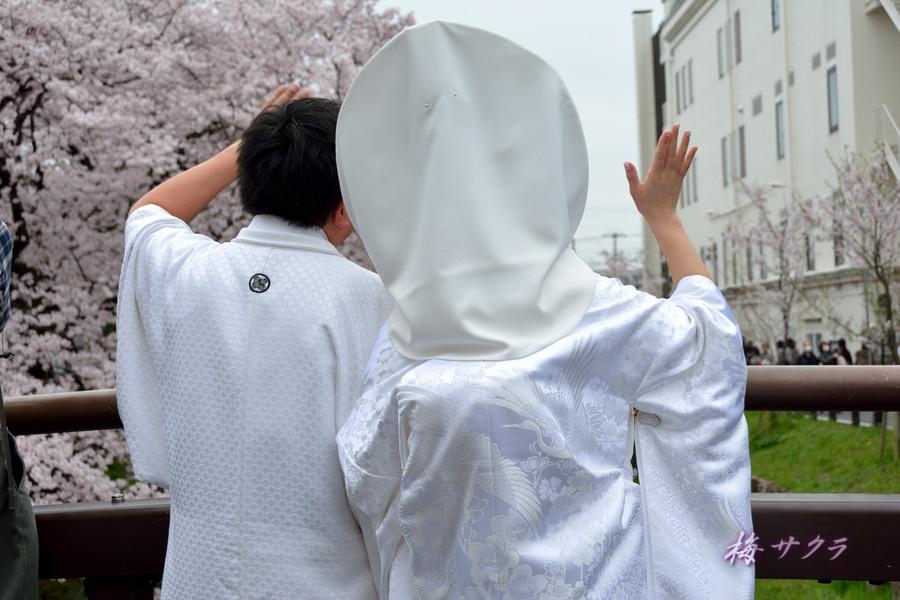 小江戸川越桜祭り3(10)変更済