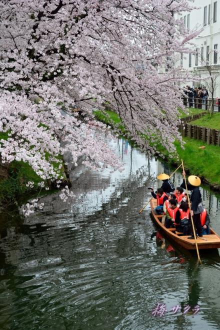小江戸川越桜祭り3(2-2)変更済