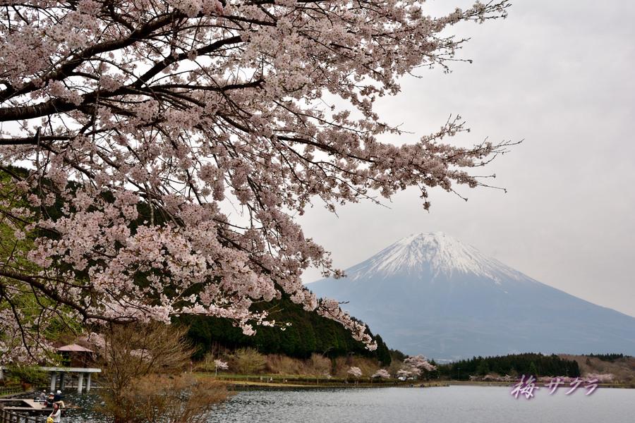 田貫湖1変更済