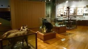 京都大学総合博物館