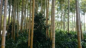竹の資料館