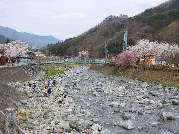 160416桜道志村0009
