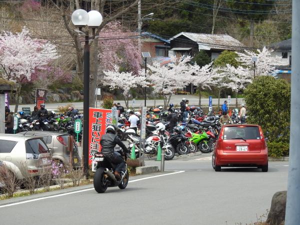 160416桜道志村0010