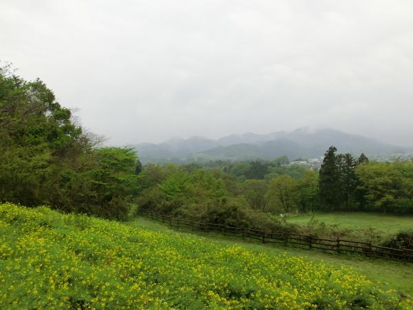 160426 160424津久井湖城山公園0007