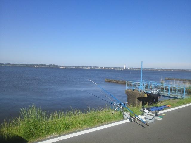160504霞ヶ浦鯉釣り