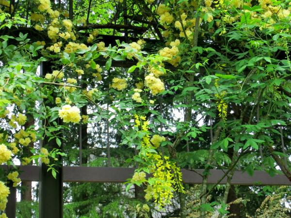 160511 160506水戸市植物公園0001