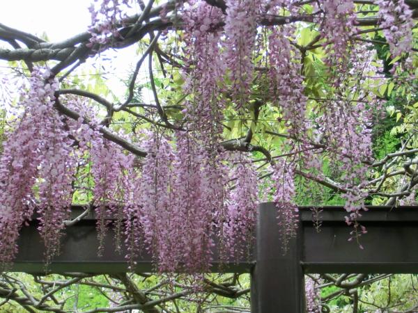 160511 160506水戸市植物公園0003