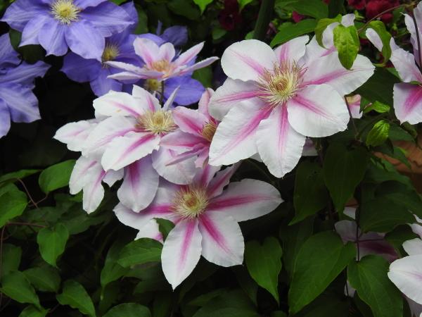 160511 160506水戸市植物公園0011