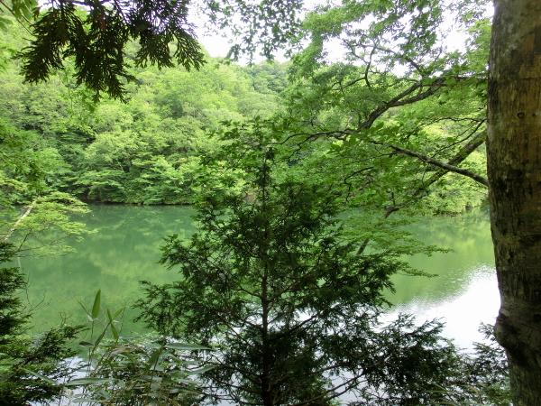 160812 160726十二湖~ベンセ湿原0001