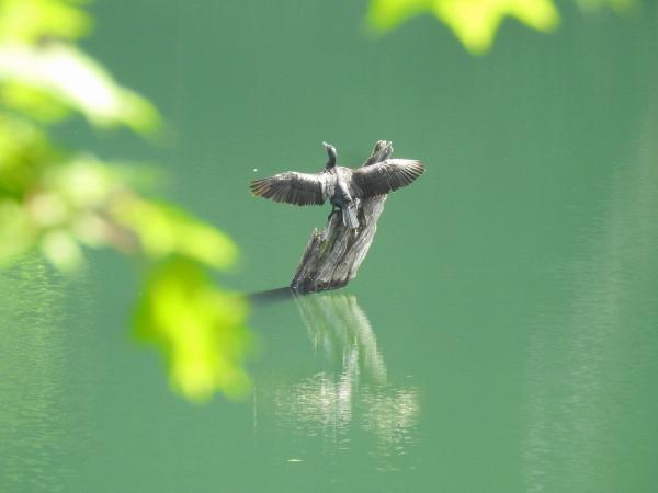 160812 160726十二湖~ベンセ湿原0009