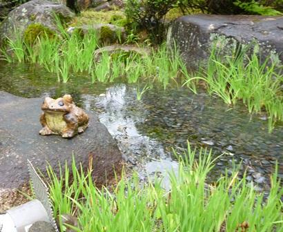 【梅雨】庭