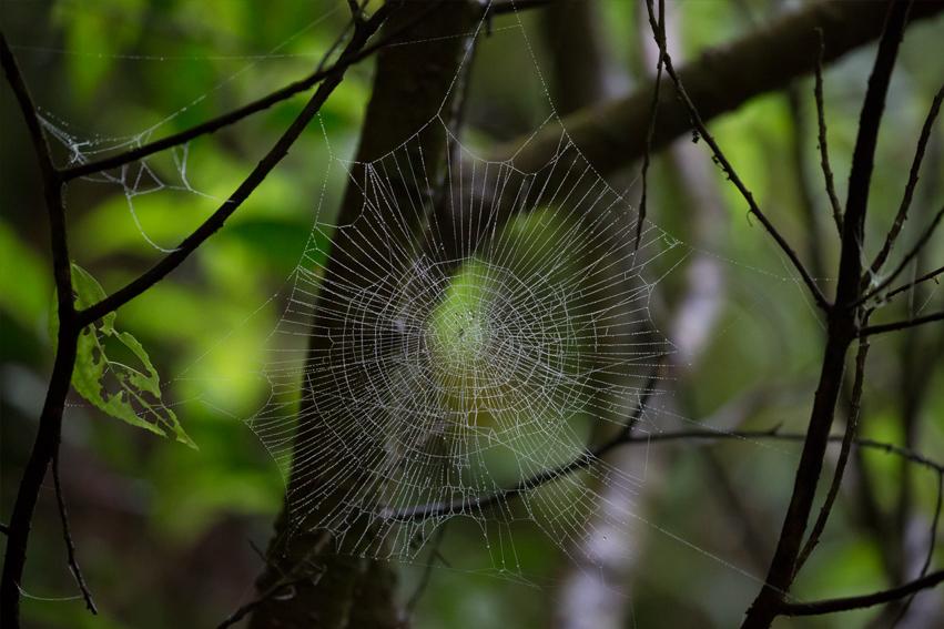 160530クモの巣