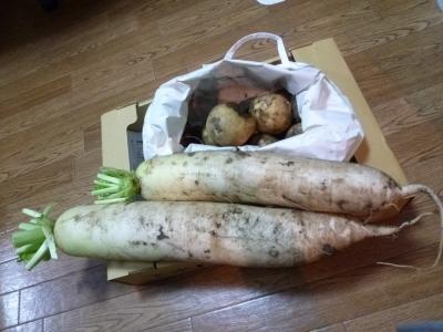 2016.5.30野菜-3