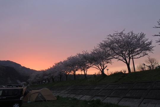 22夕方の桜