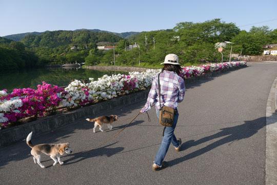 022つつじの花の散歩