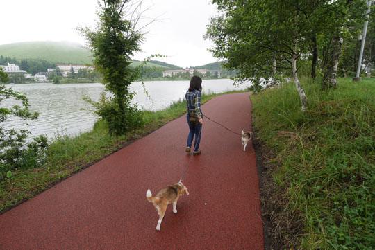 106白樺湖散歩