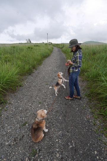 128霧ヶ峰散歩