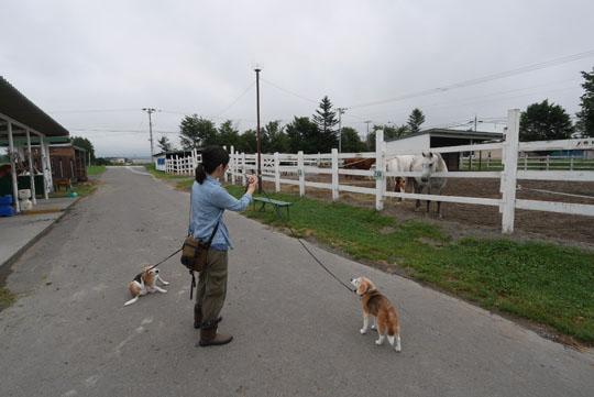 313牧場散歩