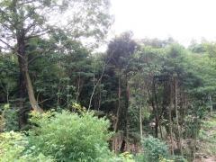 2016年度伐採予定区