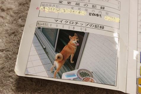 IMG_5024-s.jpg