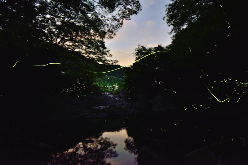 「蛍舞う山里3」 (徳島県美馬市)