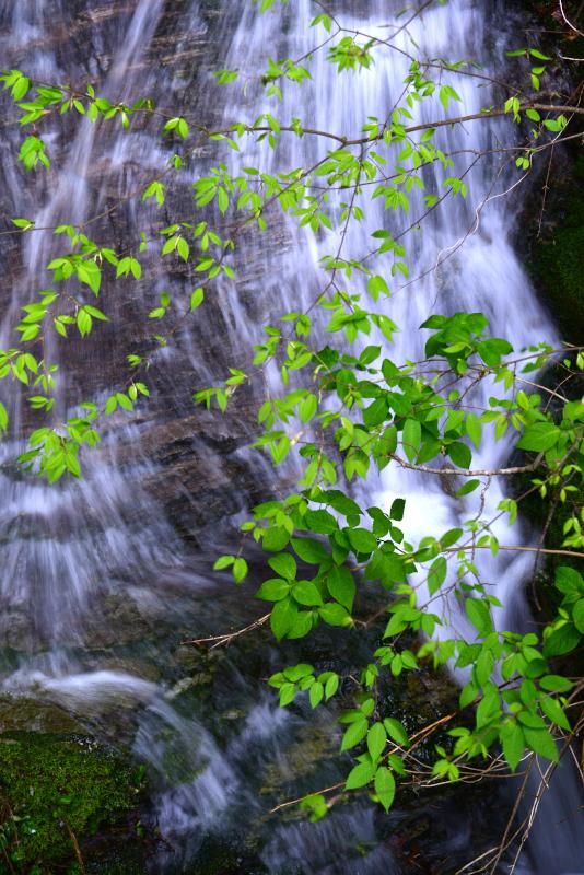 「新緑の滝」  (徳島県神山町)