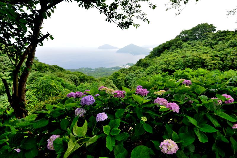 「あじさい咲く紫雲出山2」