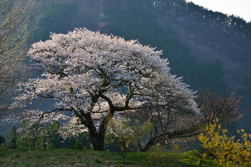 「朝陽射す」 (香川県まんのう町)