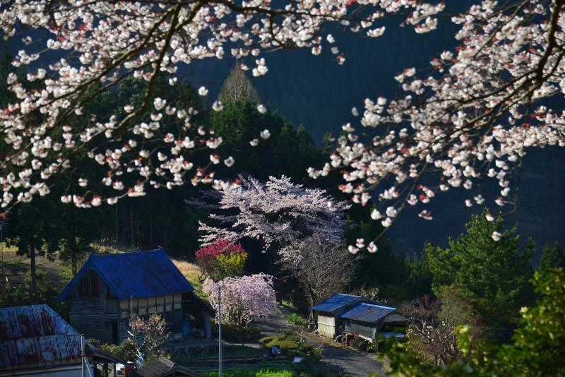 「山村の春」 (香川県まんのう町)