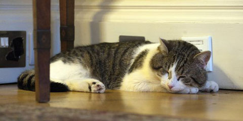 'Larry' the Downing Street cat, takes a nap at Number 10