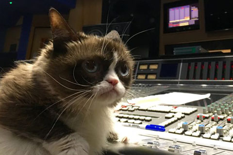 Grumpy-cat-at-Abbey-Road-studios (1)