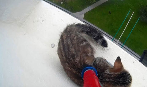 CAT-RESCUED-BALCONY-674742