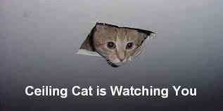 Ceiling_Cat3