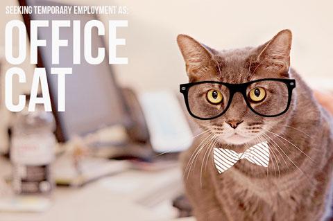 Final_Office-Cat