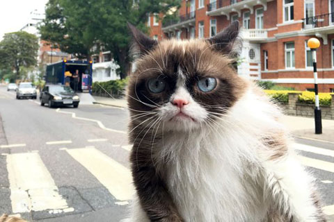 Grumpy-cat-at-Abbey-Road-studios