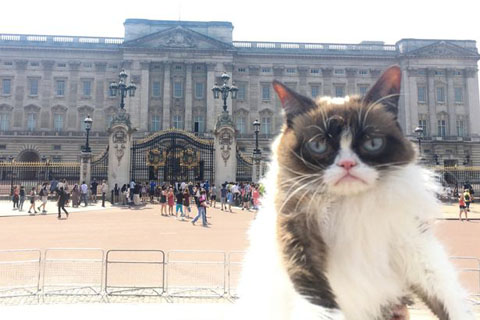 Grumpy-cat-at-Buckingham-Palace