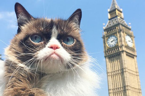 Grumpy-cat-at-The-Houses-of-Parliament
