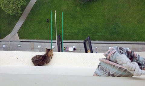 KITTEN-STUCK-ON-BALCONY-674737