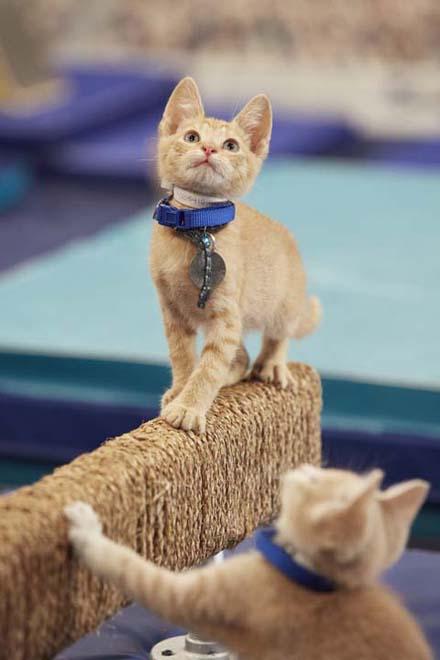 KittenSummerGames201604181489