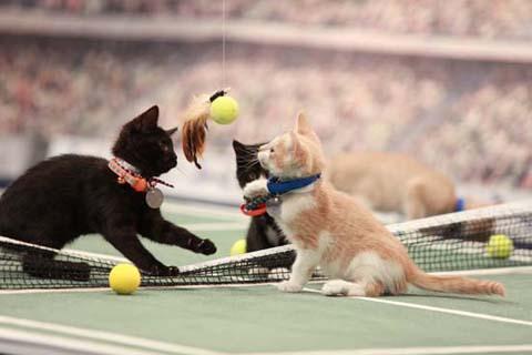 KittenSummerGames201604191527