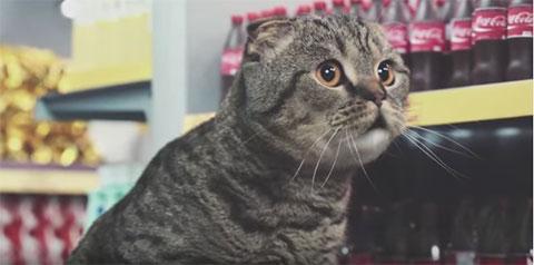 Netto-Katzen5-2