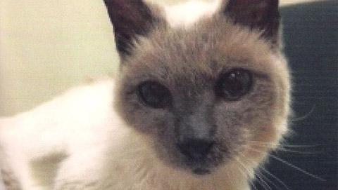 Oldest-cat_tcm30-428118