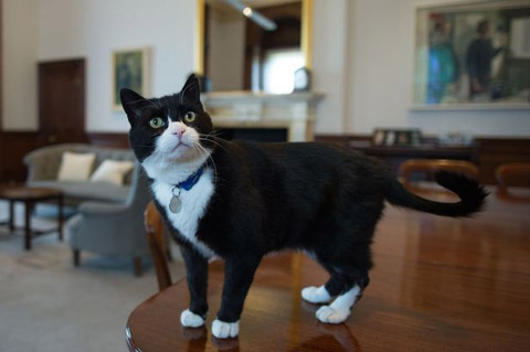 Palmerston-1