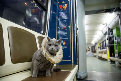 Shakespeare-traincat-1