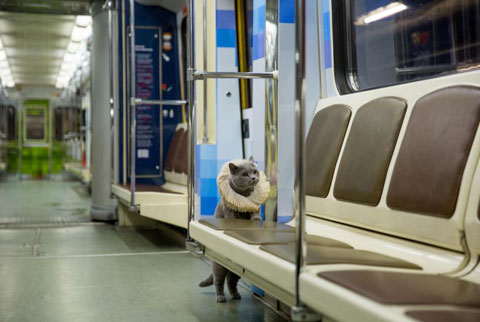 Shakespeare-traincat-3