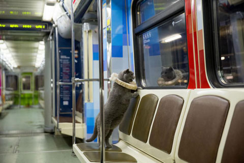 Shakespeare-traincat-7
